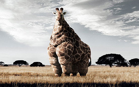 Fatness Giraffe 60 Visionary Examples of Creative Photography