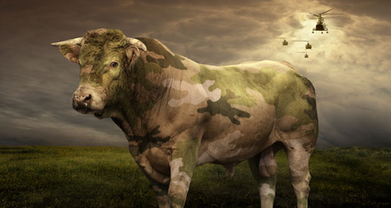 cow 60 Visionary Examples of Creative Photography