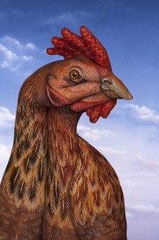 Chicken 226x3401 30 Incredible Hand Paintings by Guido Daniele