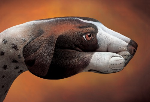 Dog Pointer1 499x3401 30 Incredible Hand Paintings by Guido Daniele