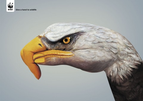Eagle 480x3401 30 Incredible Hand Paintings by Guido Daniele