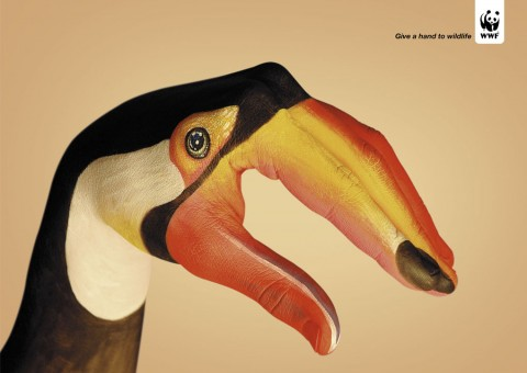 Toukan 480x3401 30 Incredible Hand Paintings by Guido Daniele