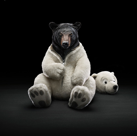 Black bear l1 40 Visionary Examples of Creative Photography #4