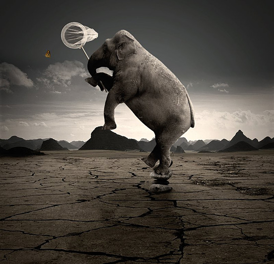 Crazy Elephant l1 40 Visionary Examples of Creative Photography #4