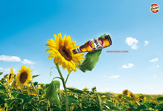 Sunflower l1 40 Visionary Examples of Creative Photography #4