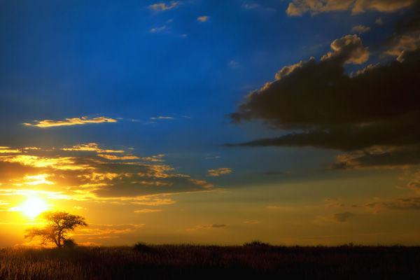 Lonely Camel Thorn 30 Beautiful Examples of Sunrise Photography