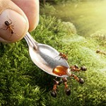 ant-tales