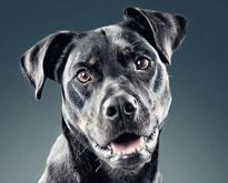 Dog-Portraits-by-Daniel-Sadlowski