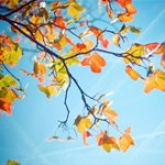 Colorful-Photos-of-Autumn
