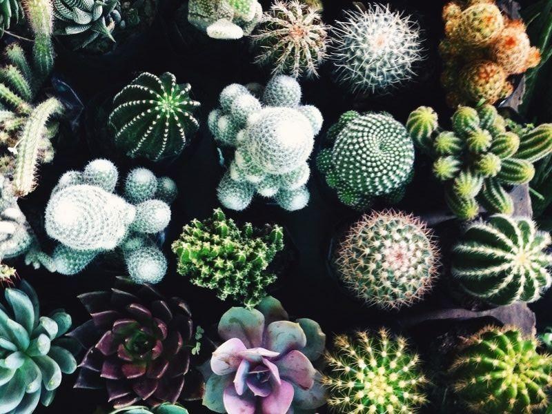 cactus-texture-nature