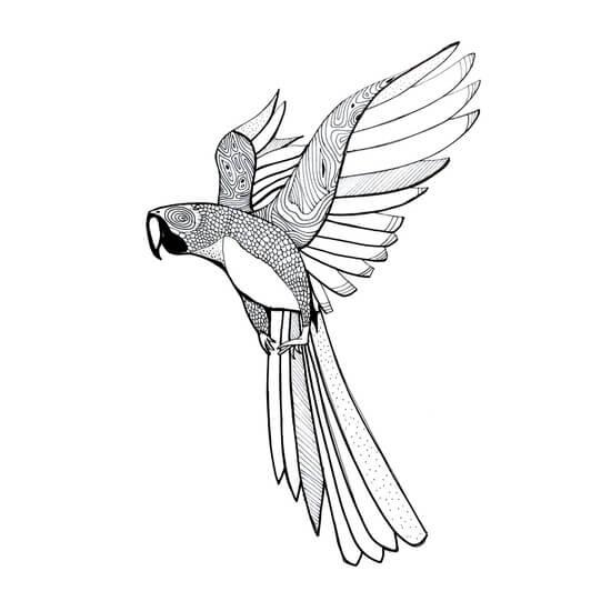 Parakit sketch by Mads Hindhede Svanegaard