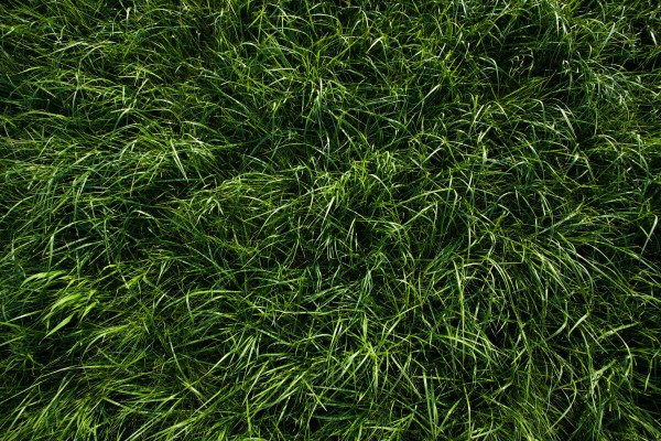 Deep-Green-Grass-Texture