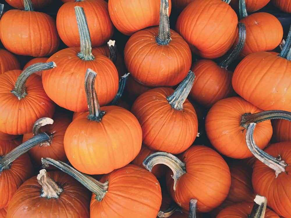 Pumpkin Madness