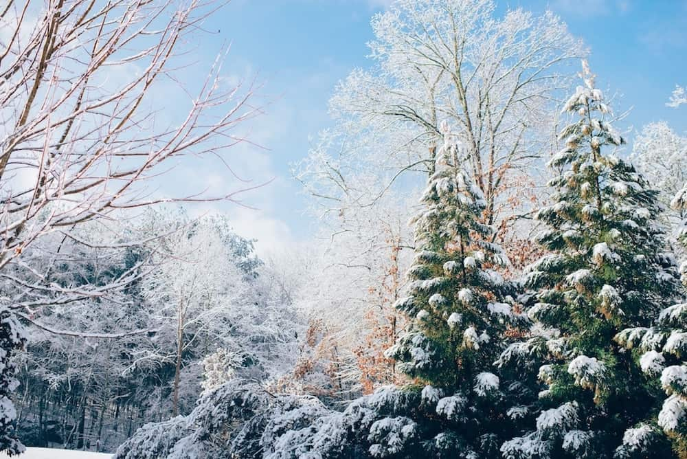 Quotes winter love