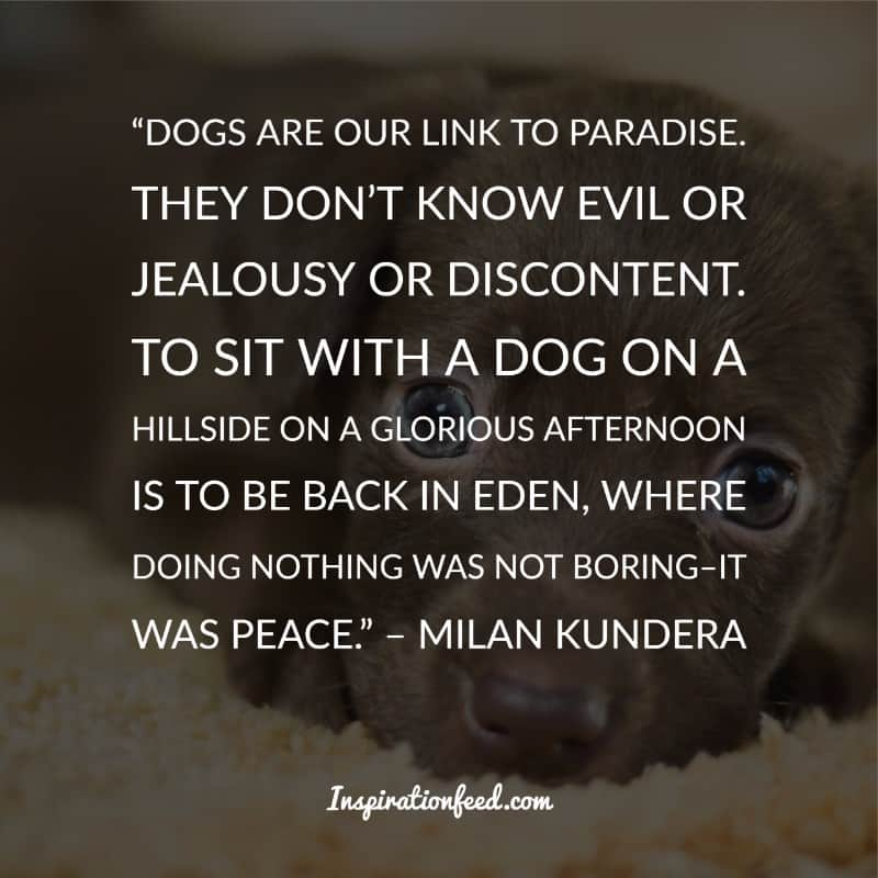 Dog Quotes and Sayings
