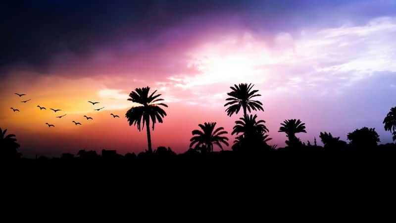 Palm tree sunset during monsoon season in Asia
