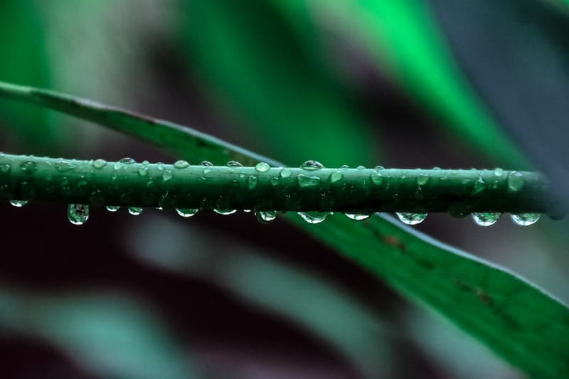 morning dew on plant leaves