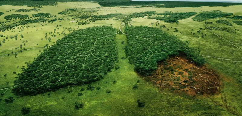 Do you understand the fragility of our environment 2