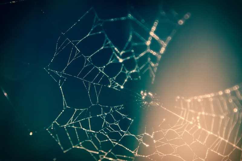 close-up-photography-of-spider-web