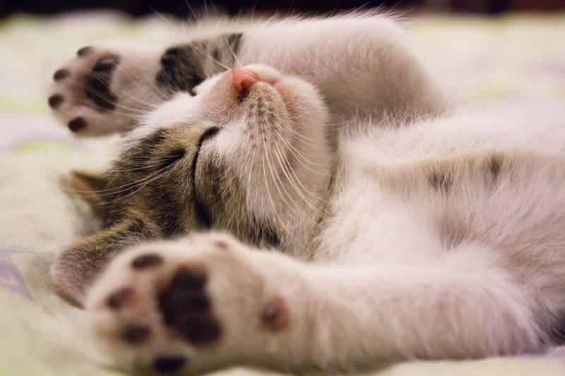 cute kittie sleeping