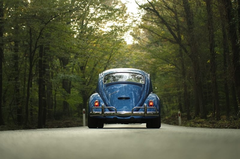 Blue wv beetle in the forest