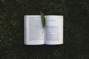 nature-grass-leaf-green