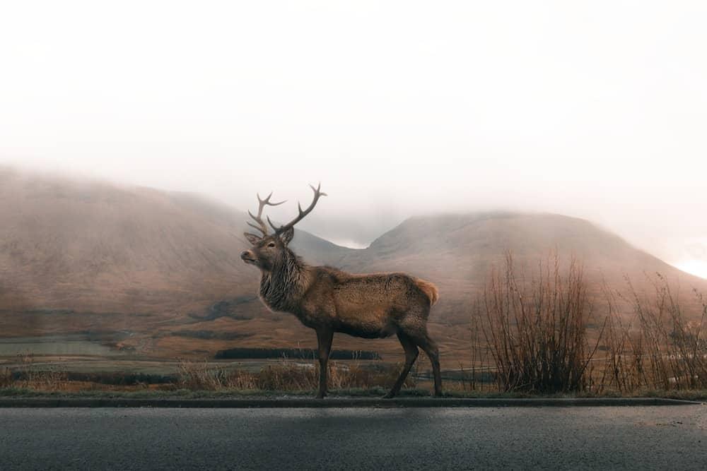 Dramatic Elk