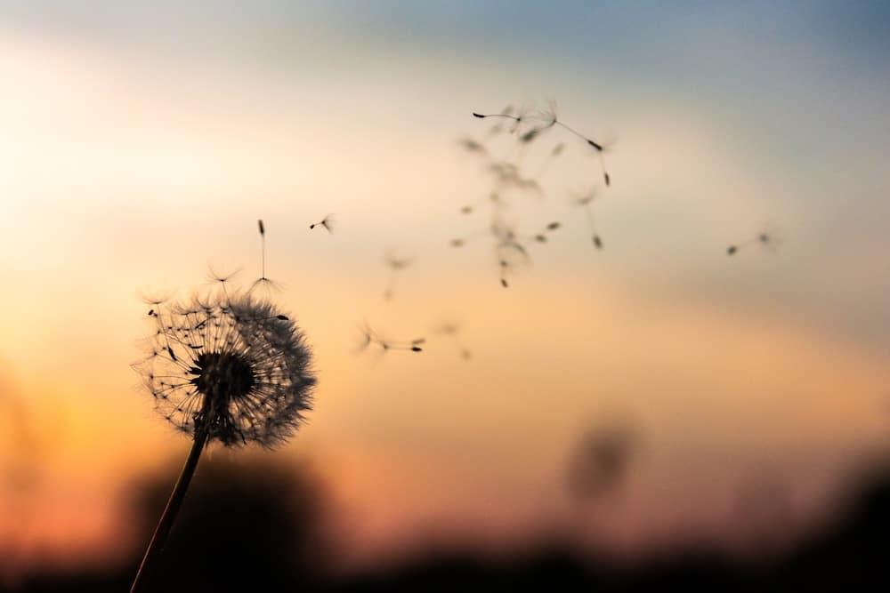 Freedom Flower