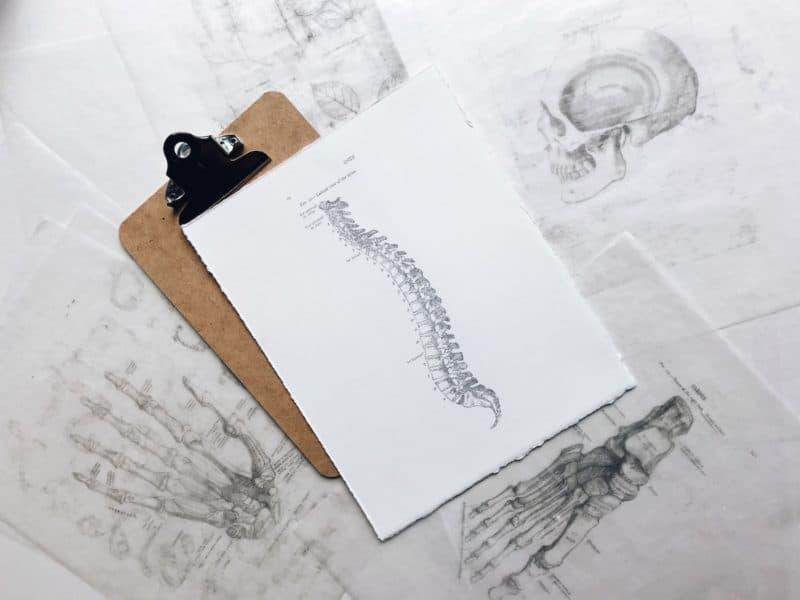 Spine sketch