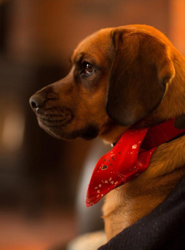 DIY Pet Collar