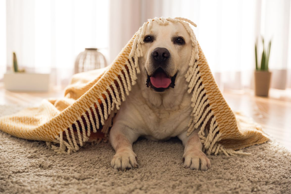 Best Carpet Cleaner for Pets Stains