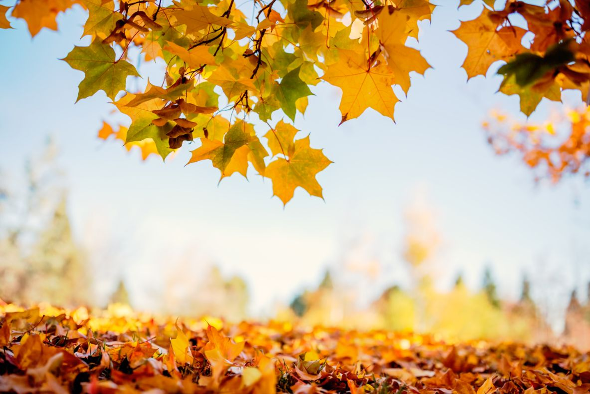 How to use a leaf blower to collect leaves