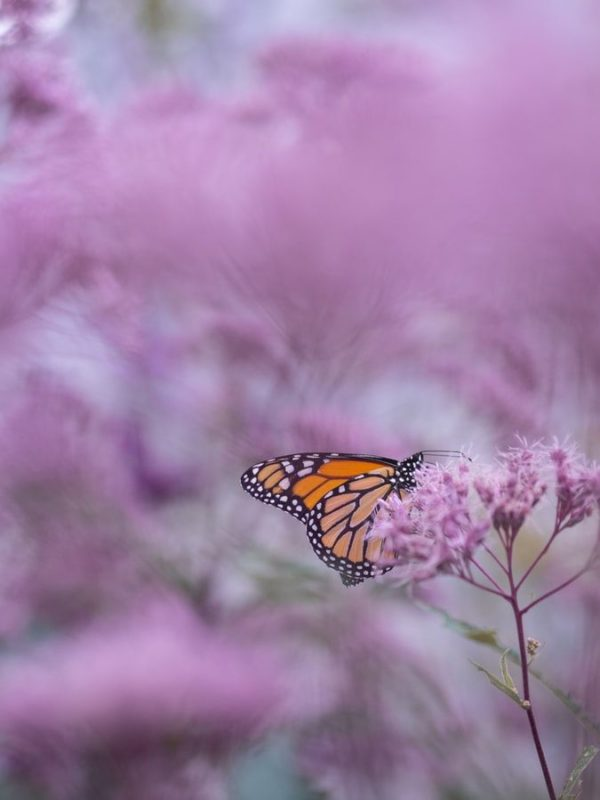 30 Beautiful Butterfly Wallpapers And Backgrounds Inspirationfeed
