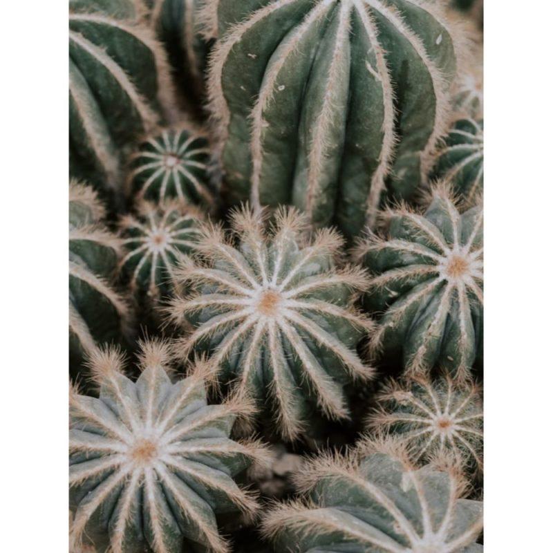 Cactus Wallpapers