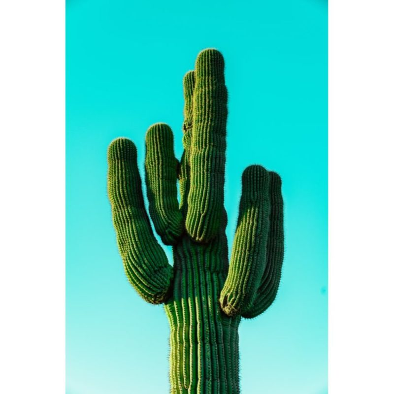 40 Gorgeous Cactus Wallpapers To Use As Your Background
