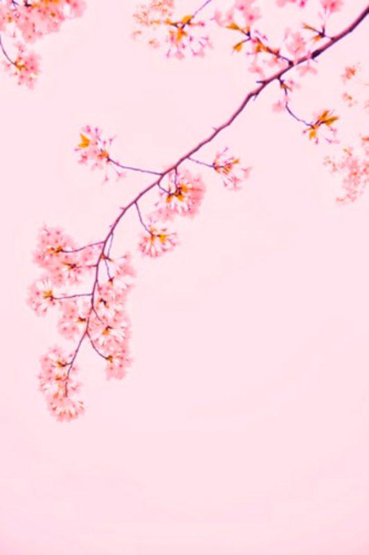 Free Pink Wallpapers