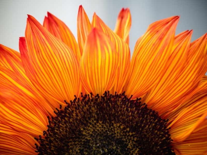 30 Wonderful Sunflower Wallpapers To Brighten Your Day Inspirationfeed