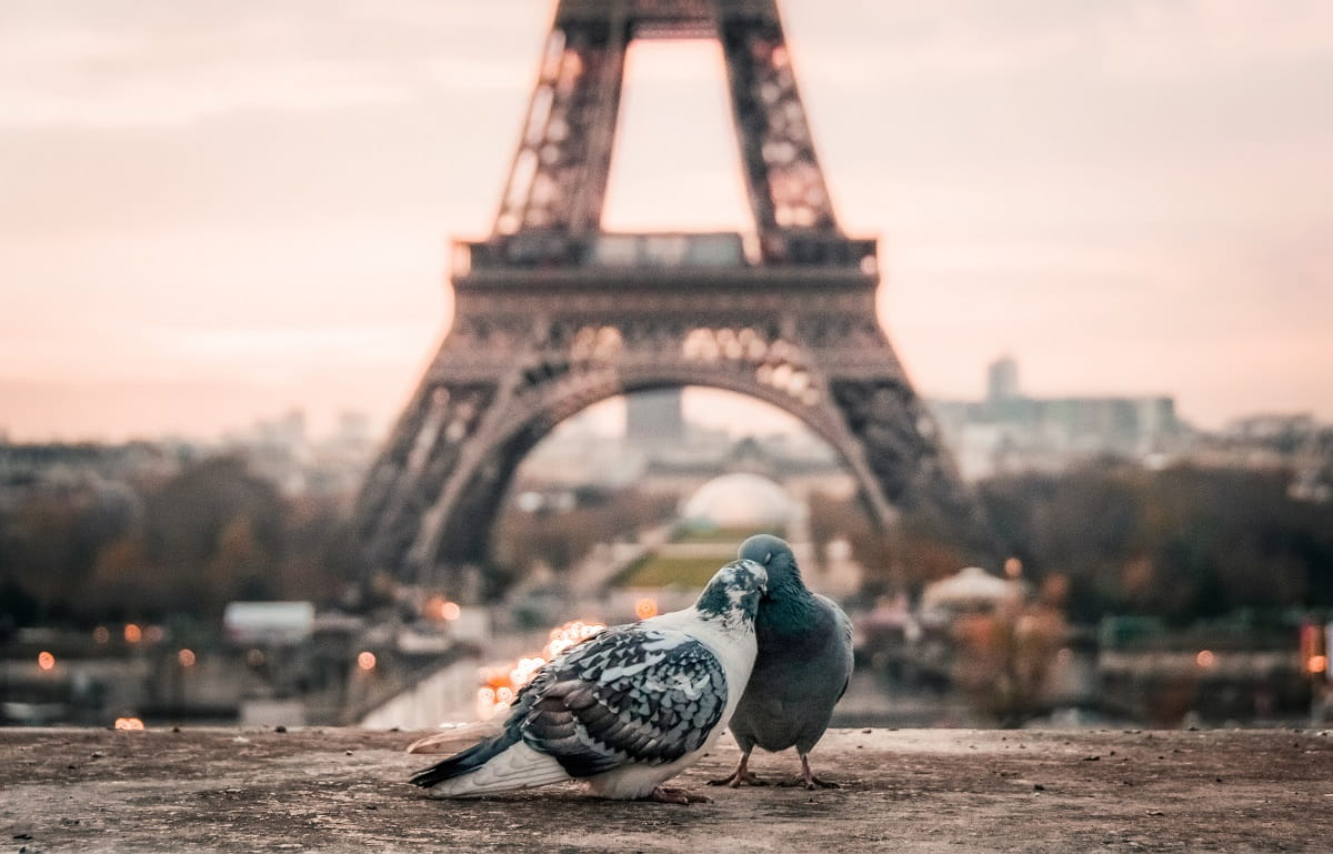Two Pigeons Kissing