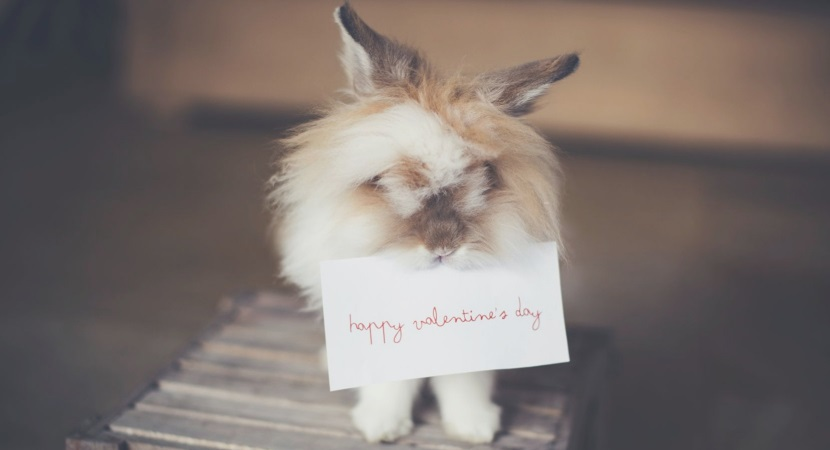 What are the Most Lovable Gifts for this Valentine's Day?