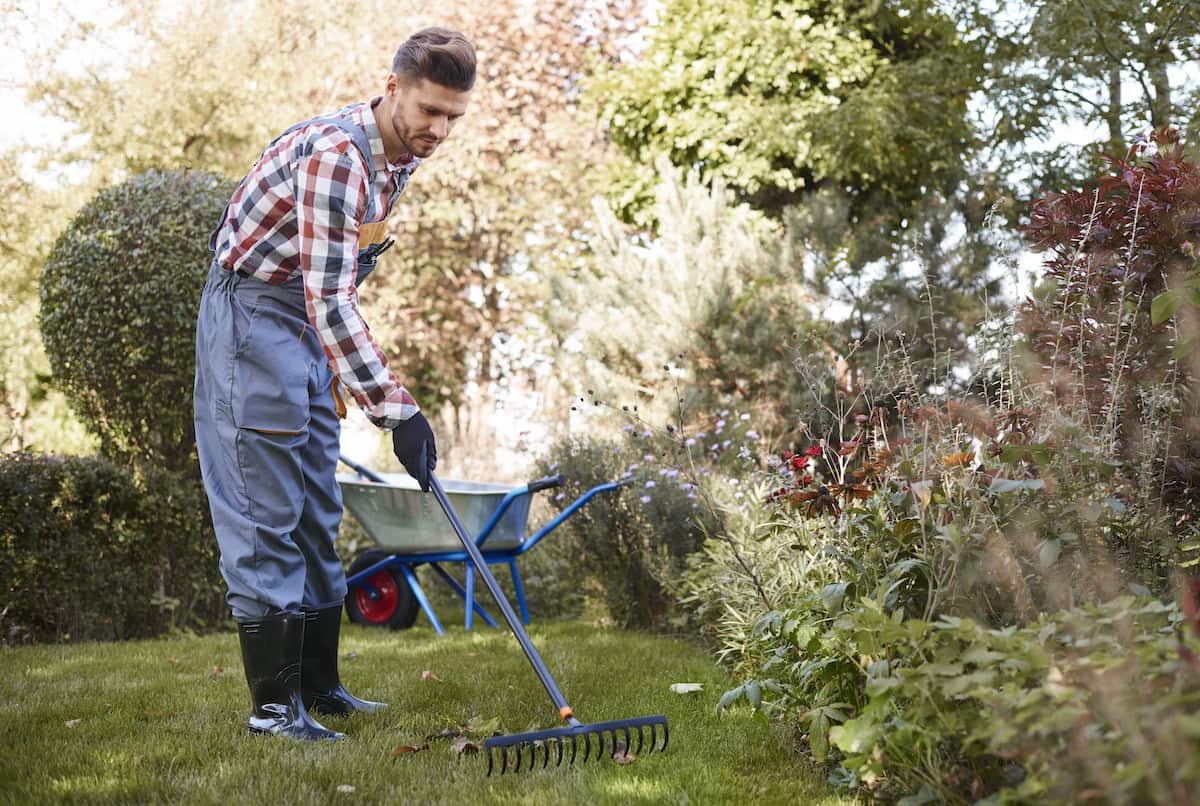 Getting your English garden ready for the winter: how to treat your plants?