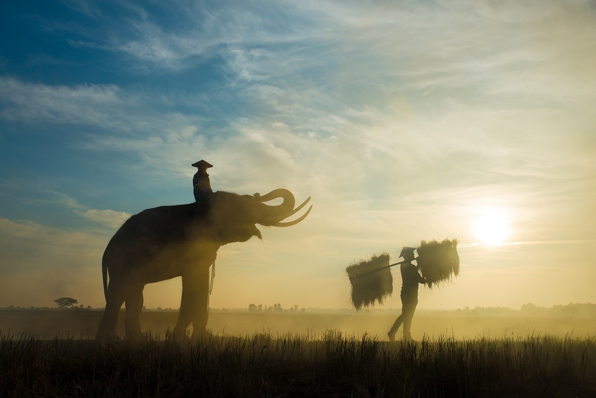 elephants-at-sunrise-in-thailand